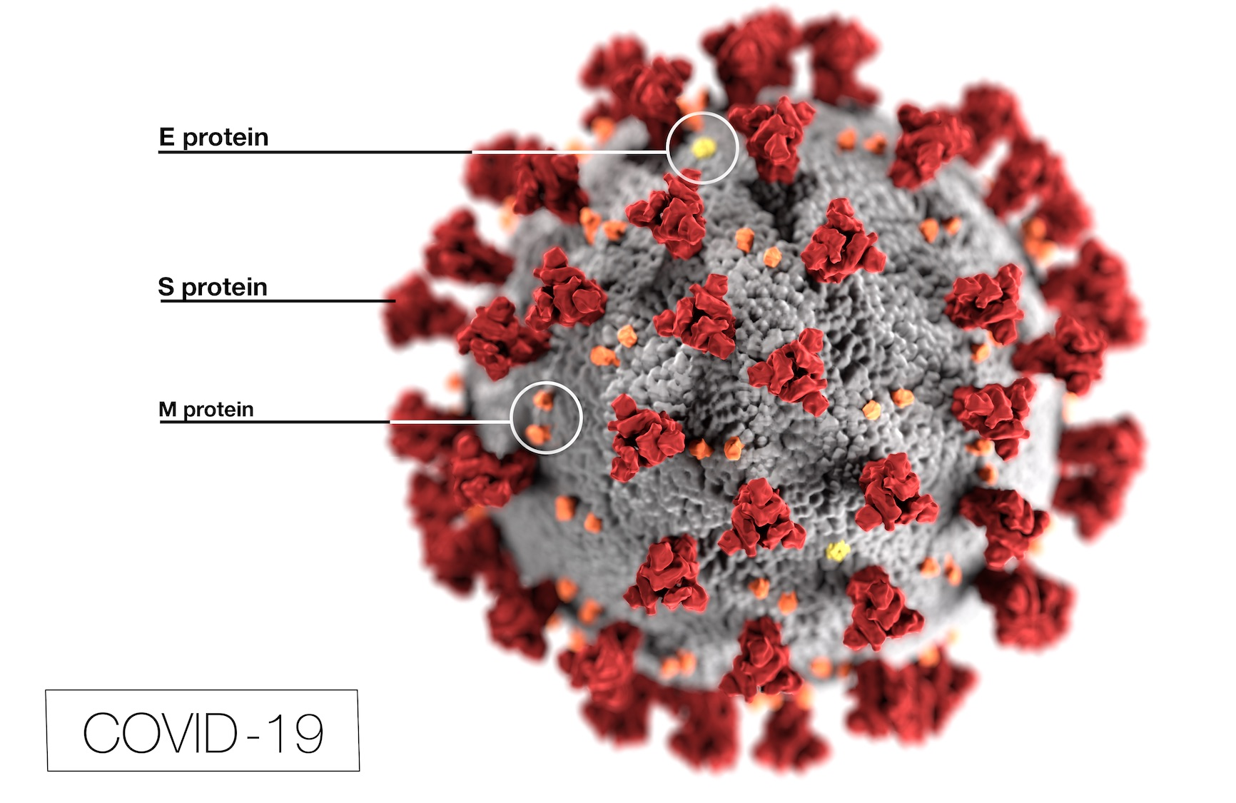 Rendering of coronavirus showing the spike proteins of the virus used to make the first COVID-19 vaccine